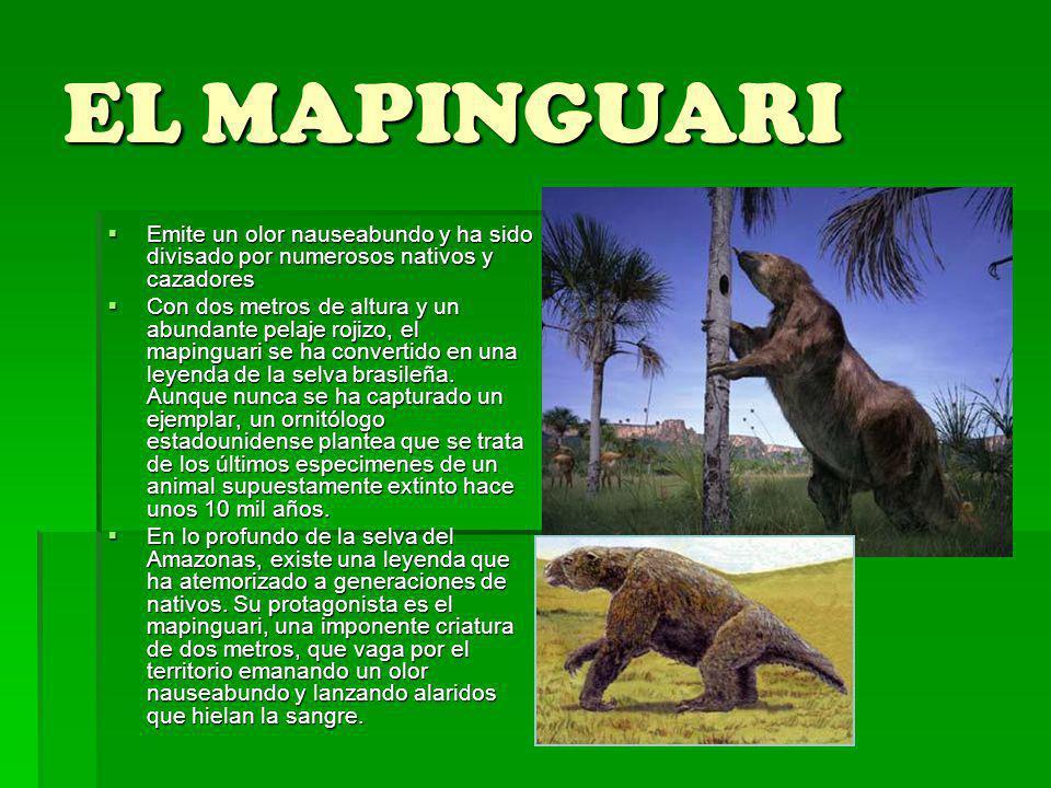 EL MAPINGUARI Emite un olor nauseabundo y ha sido divisado por numerosos nativos y cazadores Emite un olor nauseabundo y ha sido divisado por numerosos nativos y cazadores Con dos metros de altura y un abundante pelaje rojizo, el mapinguari se ha convertido en una leyenda de la selva brasileña.