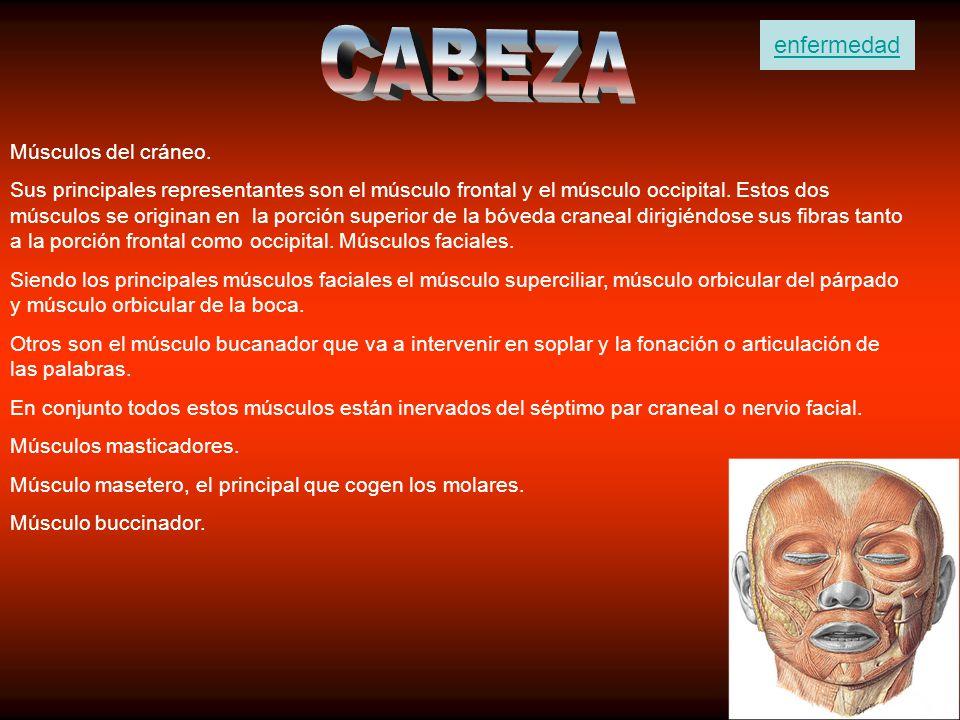 La enfermedad de Perthes (en realidad llamada Legg-Calvé-Perthes) es una enfermedad de la cadera del niño en la que se produce una debilidad progresiva de la cabeza del fémur y que puede provocar una deformidad permanente de la misma.