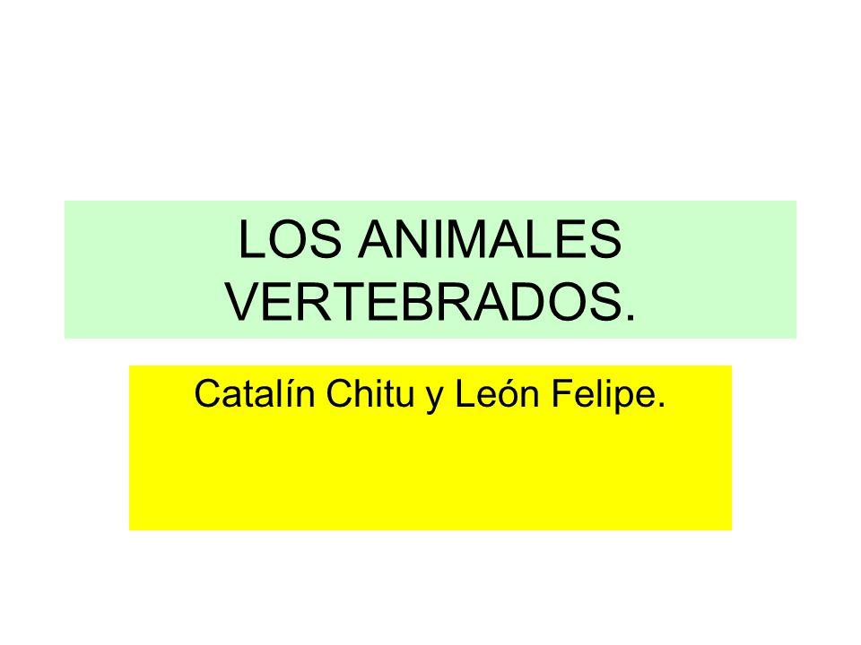 LOS ANIMALES VERTEBRADOS. Catalín Chitu y León Felipe.