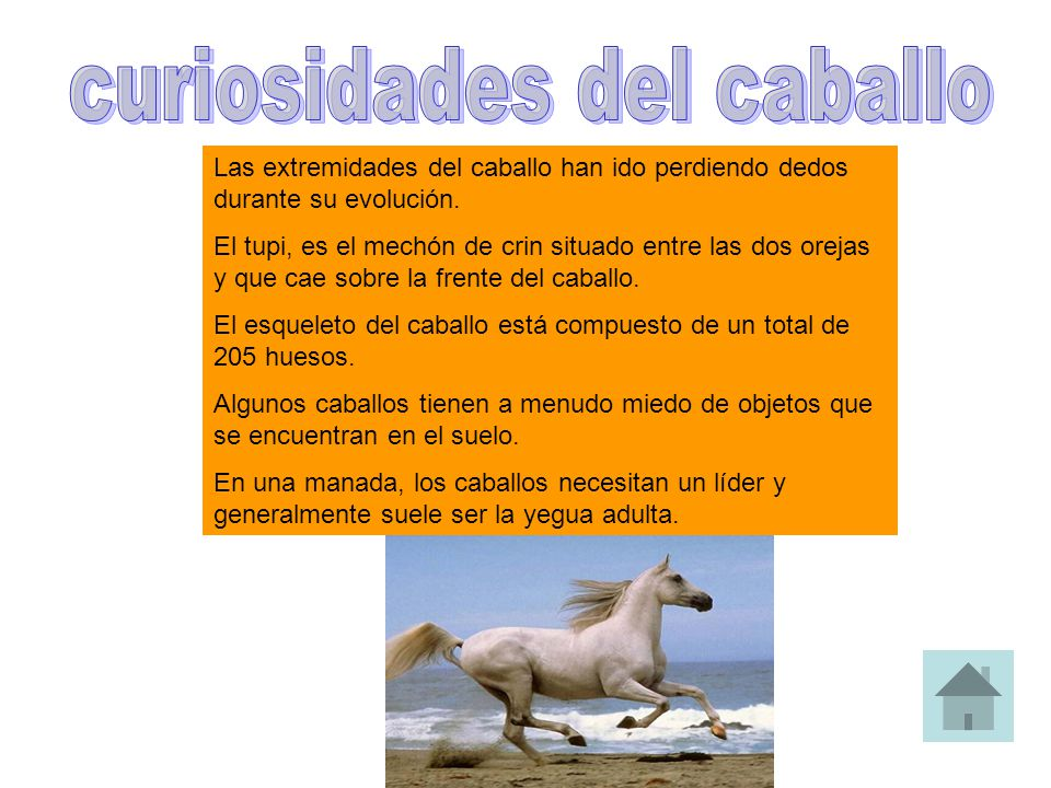 Las extremidades del caballo han ido perdiendo dedos durante su evolución. El tupi, es el mechón de crin situado entre las dos orejas y que cae sobre