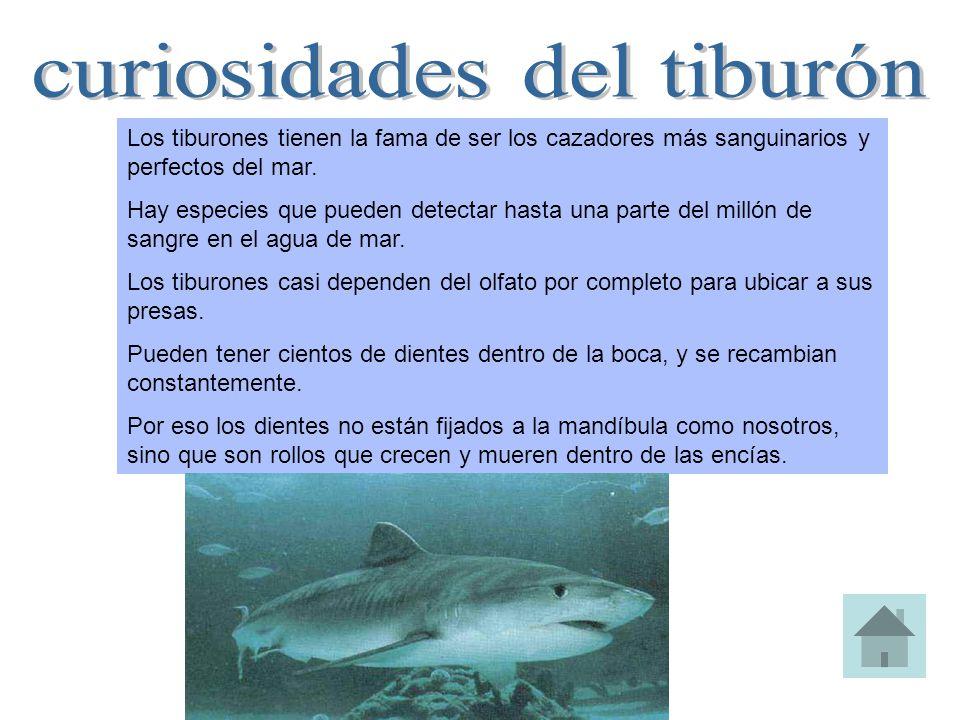 Los tiburones tienen la fama de ser los cazadores más sanguinarios y perfectos del mar. Hay especies que pueden detectar hasta una parte del millón de