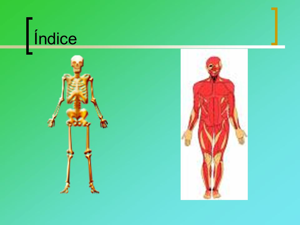 El esqueleto humano El esqueleto humano es el conjunto total y organizado de piezas óseas que proporciona al cuerpo humano una firme estructura multifuncional.