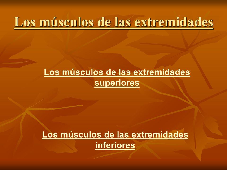 Los músculos de las extremidades superiores Los músculos de las extremidades inferiores