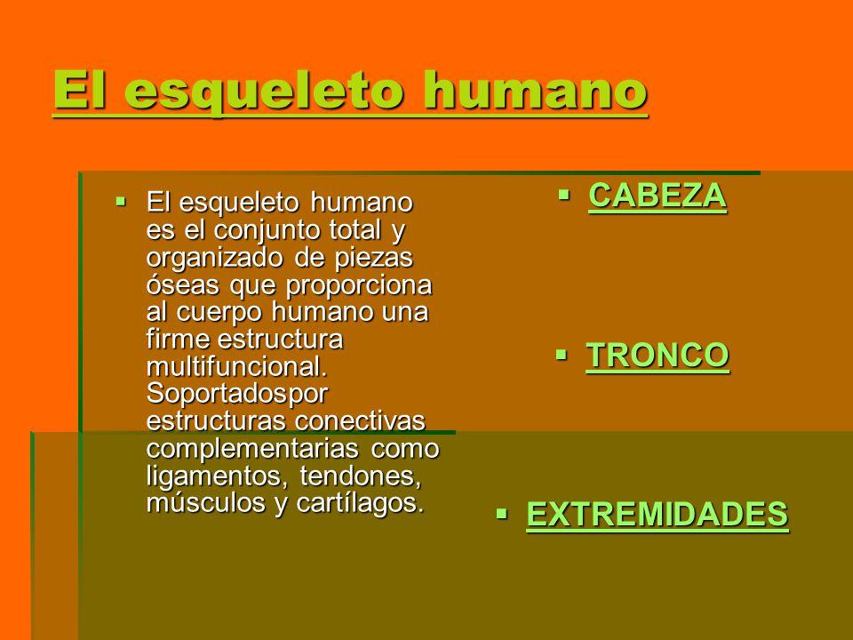 El esqueleto humano El esqueleto humano es el conjunto total y organizado de piezas óseas que proporciona al cuerpo humano una firme estructura multif
