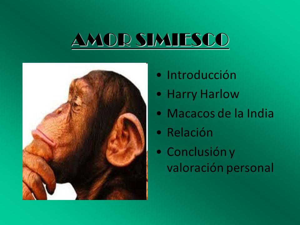 AMOR SIMIESCO Introducción Harry Harlow Macacos de la India Relación Conclusión y valoración personal