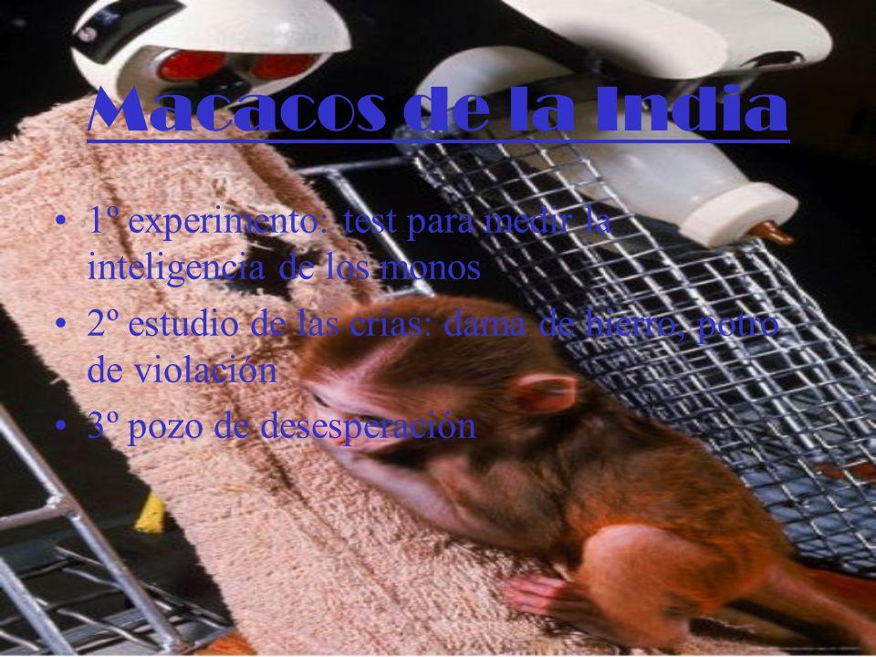 Macacos de la India 1º experimento: test para medir la inteligencia de los monos 2º estudio de las crías: dama de hierro, potro de violación 3º pozo de desesperación