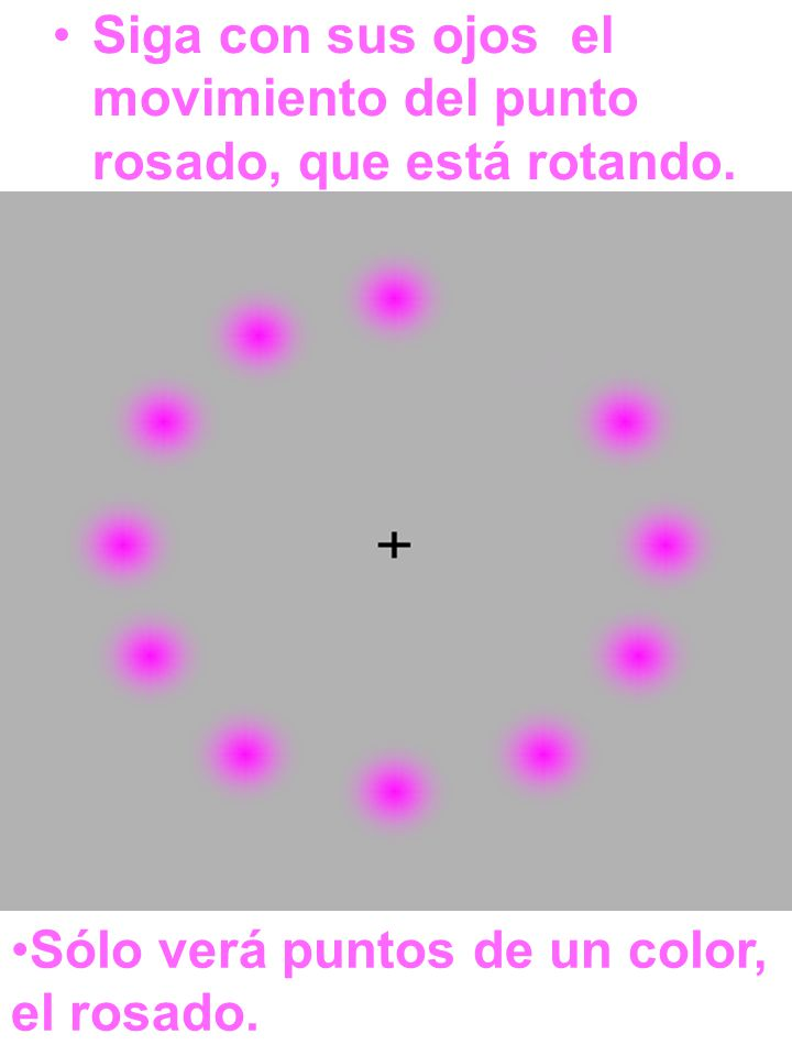 Siga con sus ojos el movimiento del punto rosado, que está rotando. Sólo verá puntos de un color, el rosado.