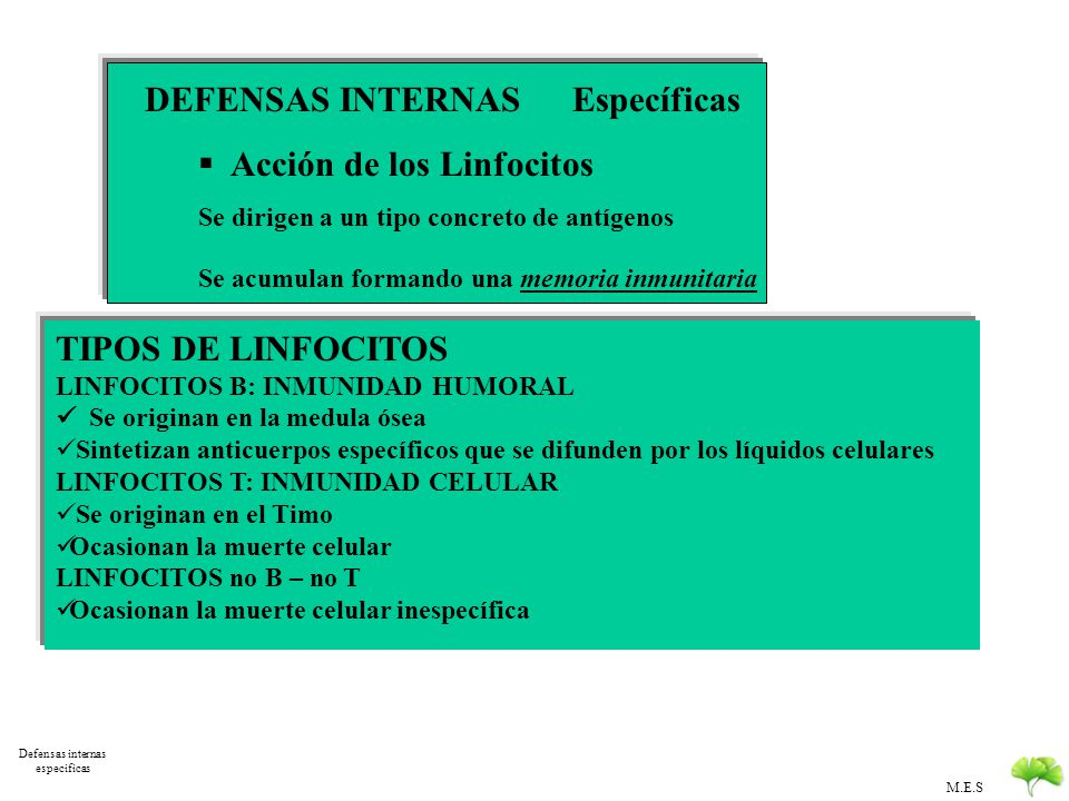 M.E.S Defensas Internas DEFENSAS INTERNAS Inespecíficas Inflamación Leucocitos El complemento Interferón interfiere en la replicación de los virus Sin