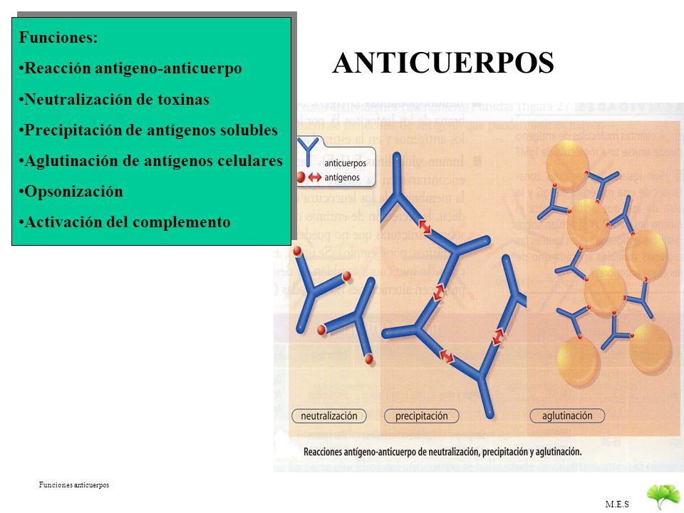 M.E.S ANTICUERPOS (Inmunoglobulinas, Gammaglobulinas) Estructura: Proteína + Glúcido 2 cadenas pesadas, 2 cadenas ligeras Unión por puentes disulfuros