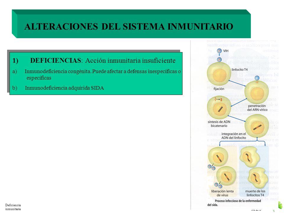 M.E.S ALTERACIONES DEL SISTEMA INMUNITARIO 1) DEFICIENCIAS: Acción inmunitaria insuficiente 2) HIPERSENSIBILIDAD: Acción inmunitaria excesiva 3) ENFER