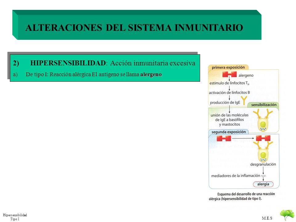 M.E.S ALTERACIONES DEL SISTEMA INMUNITARIO 1) DEFICIENCIAS: Acción inmunitaria insuficiente 2) HIPERSENSIBILIDAD: Acción inmunitaria excesiva alergeno