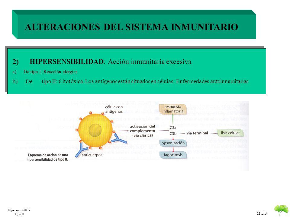 M.E.S ALTERACIONES DEL SISTEMA INMUNITARIO 2) HIPERSENSIBILIDAD: Acción inmunitaria excesiva alergeno a) De tipo I: Reacción alérgica El antigeno se l