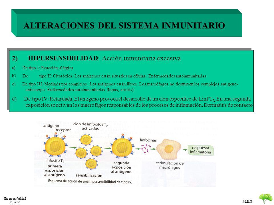 M.E.S ALTERACIONES DEL SISTEMA INMUNITARIO 2) HIPERSENSIBILIDAD: Acción inmunitaria excesiva a) De tipo I: Reacción alérgica b) De tipo II: Citotóxica
