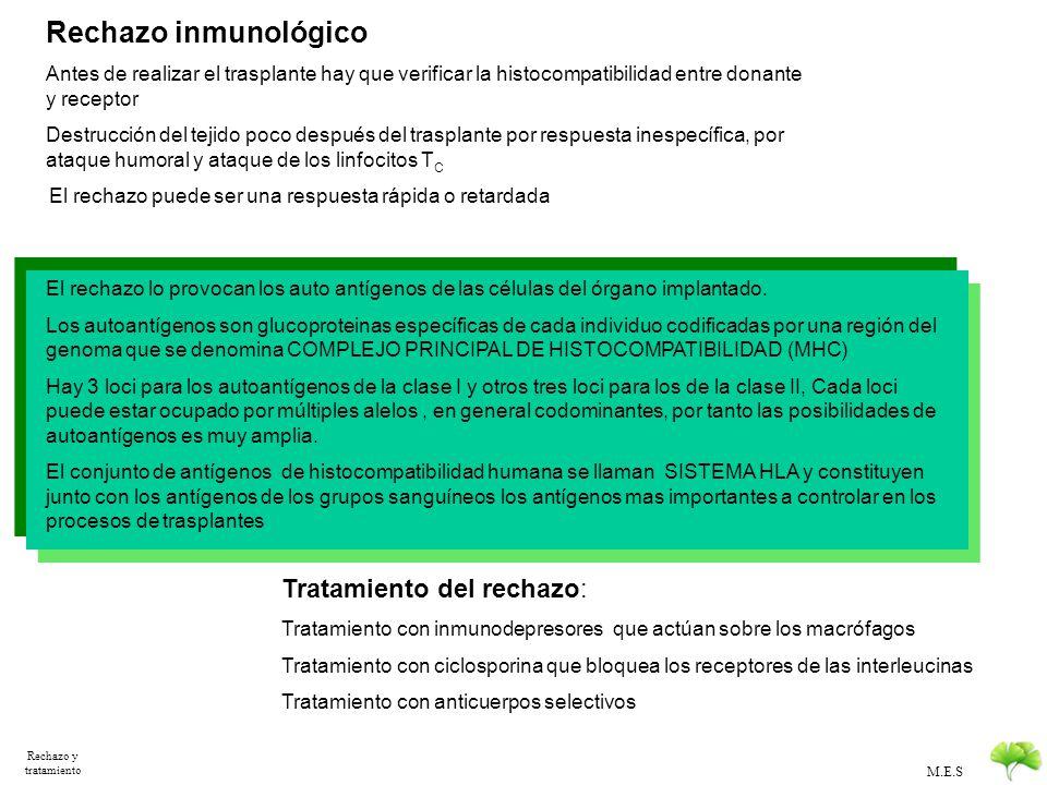 M.E.S Clasificación de trasplantes Clasificación de los trasplantes: Se clasifican según el sitio del trasplante y según la relación genética entre do