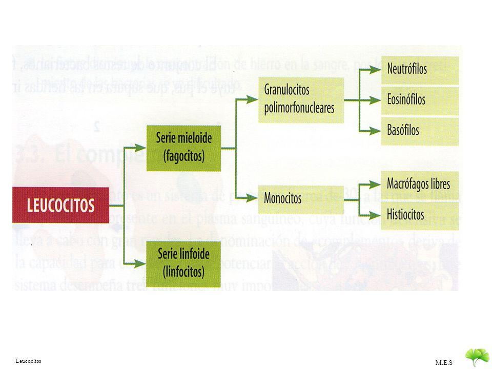 M.E.S Leucocitos