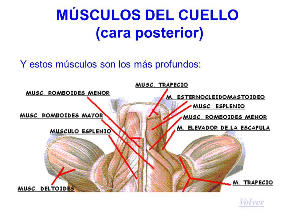 Principales consecuencias de la postura de sofá Aumento mantenido de la curvatura dorsal, con continua tensión de los ligamentos posteriores de las vértebras y de los músculos de la espalda, que puede ocasionar dolor, contracturas y aumento de la cifosis dorsal.