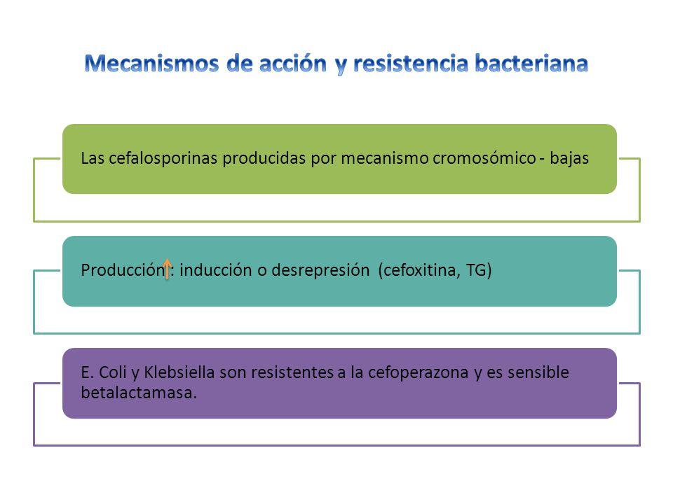Las cefalosporinas producidas por mecanismo cromosómico - bajasProducción : inducción o desrepresión (cefoxitina, TG) E.