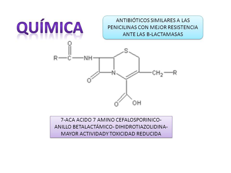 ANTIBIÓTICOS SIMILARES A LAS PENICILINAS CON MEJOR RESISTENCIA ANTE LAS B-LACTAMASAS 7-ACA ACIDO 7 AMINO CEFALOSPORINICO- ANILLO BETALACTÁMICO- DIHIDROTIAZOLIDINA- MAYOR ACTIVIDADY TOXICIDAD REDUCIDA