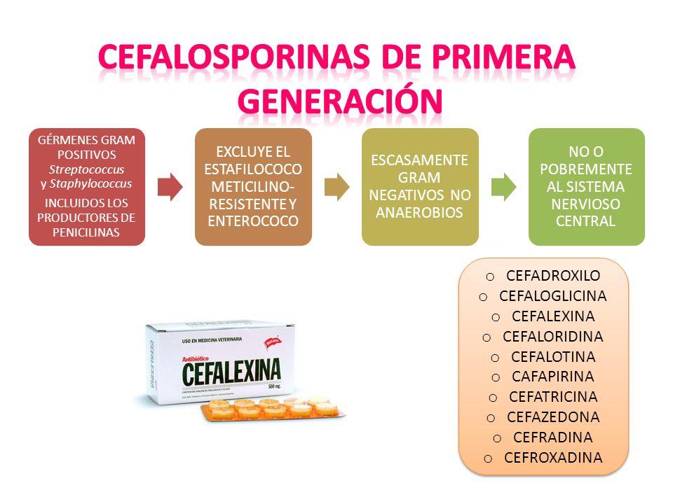GÉRMENES GRAM POSITIVOS Streptococcus y Staphylococcus INCLUIDOS LOS PRODUCTORES DE PENICILINAS EXCLUYE EL ESTAFILOCOCO METICILINO- RESISTENTE Y ENTEROCOCO ESCASAMENTE GRAM NEGATIVOS NO ANAEROBIOS NO O POBREMENTE AL SISTEMA NERVIOSO CENTRAL o CEFADROXILO o CEFALOGLICINA o CEFALEXINA o CEFALORIDINA o CEFALOTINA o CAFAPIRINA o CEFATRICINA o CEFAZEDONA o CEFRADINA o CEFROXADINA o CEFADROXILO o CEFALOGLICINA o CEFALEXINA o CEFALORIDINA o CEFALOTINA o CAFAPIRINA o CEFATRICINA o CEFAZEDONA o CEFRADINA o CEFROXADINA
