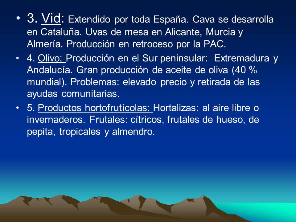 3.Vid: Extendido por toda España. Cava se desarrolla en Cataluña.