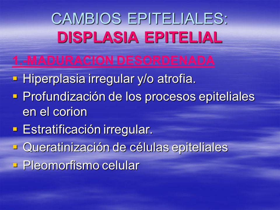CAMBIOS EPITELIALES: DISPLASIA EPITELIAL 1.-MADURACION DESORDENADA Hiperplasia irregular y/o atrofia. Hiperplasia irregular y/o atrofia. Profundizació