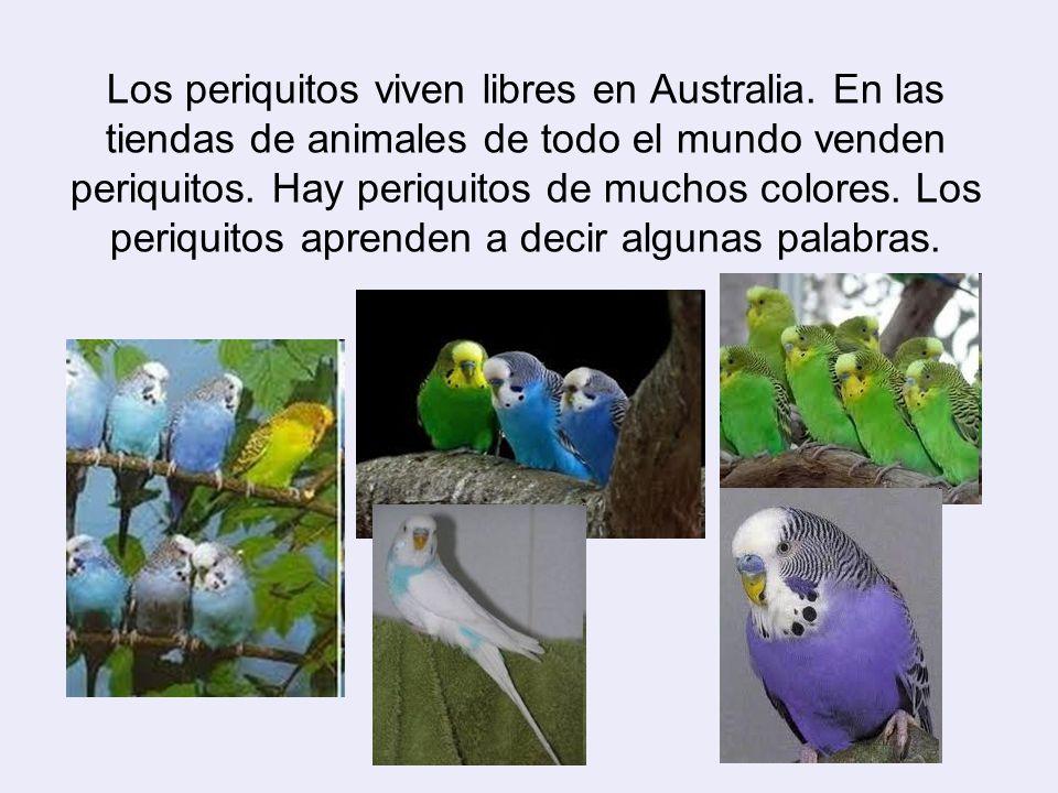 el mundo de los periquitos: