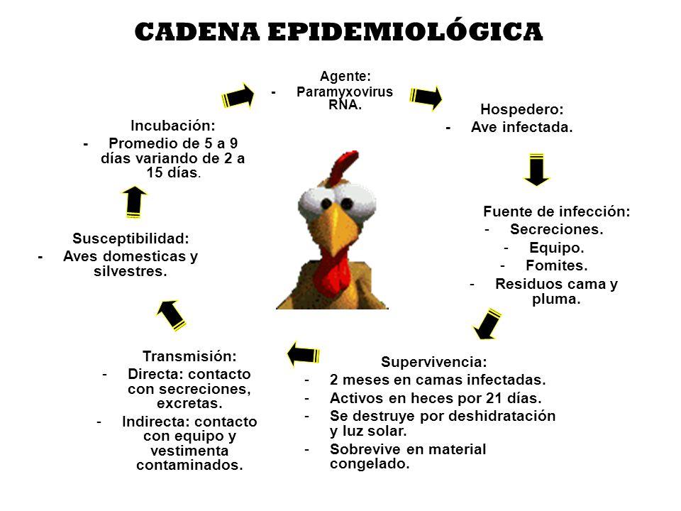 """La presentaci�n """"Cemoro67@yahoo.es. AVICULTURA Es el proceso de ..."""