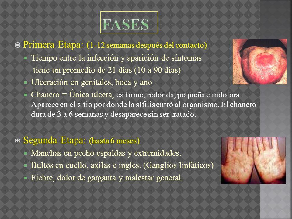 Primera Etapa: ( 1-12 semanas después del contacto) Tiempo entre la infección y aparición de síntomas tiene un promedio de 21 días (10 a 90 días) Ulce