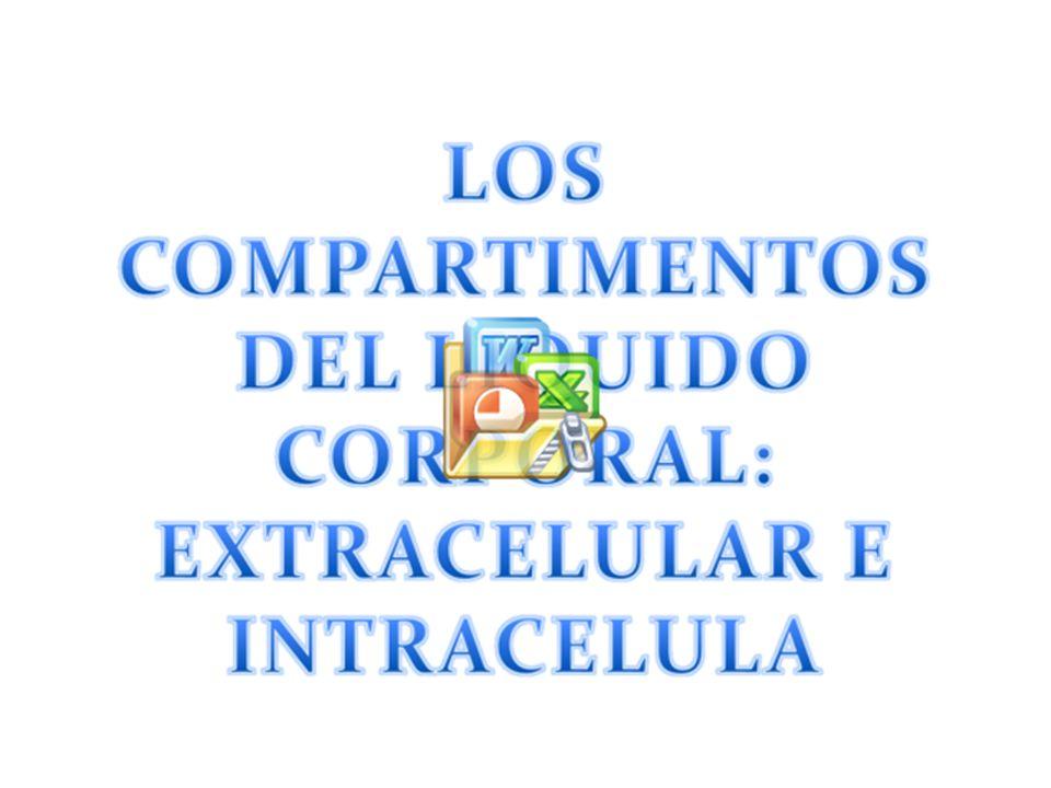 INGESTION DIARIA DE AGUA 2100 ml/dia200 ml/dia