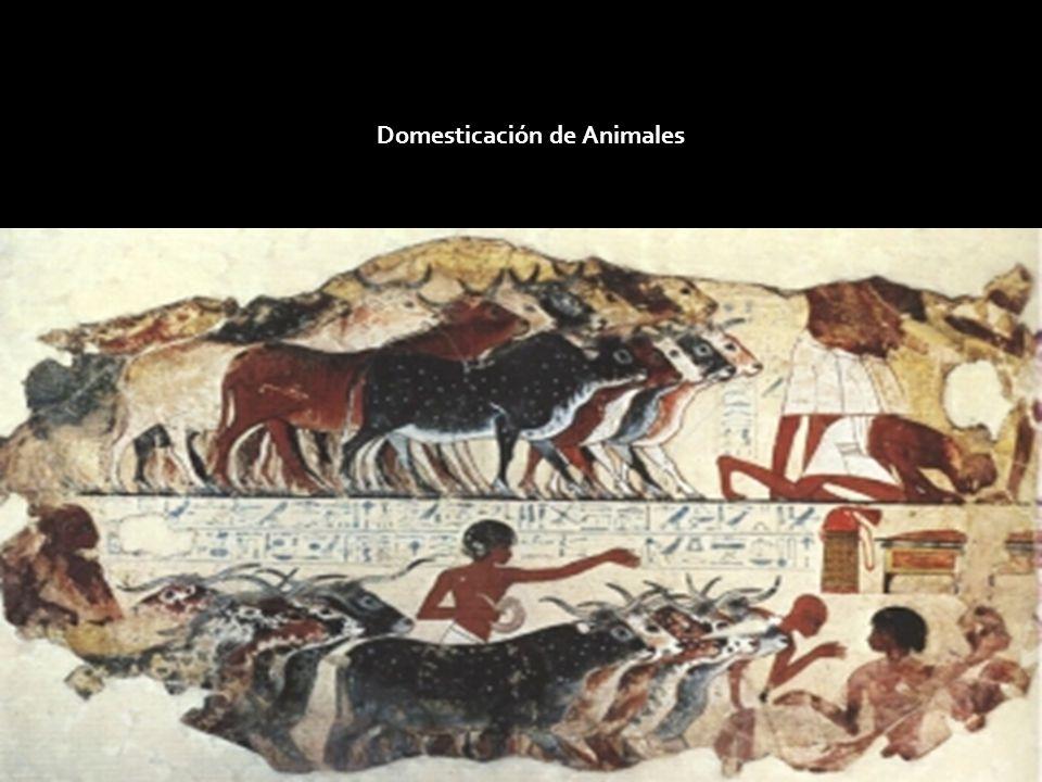 Domesticación de Animales