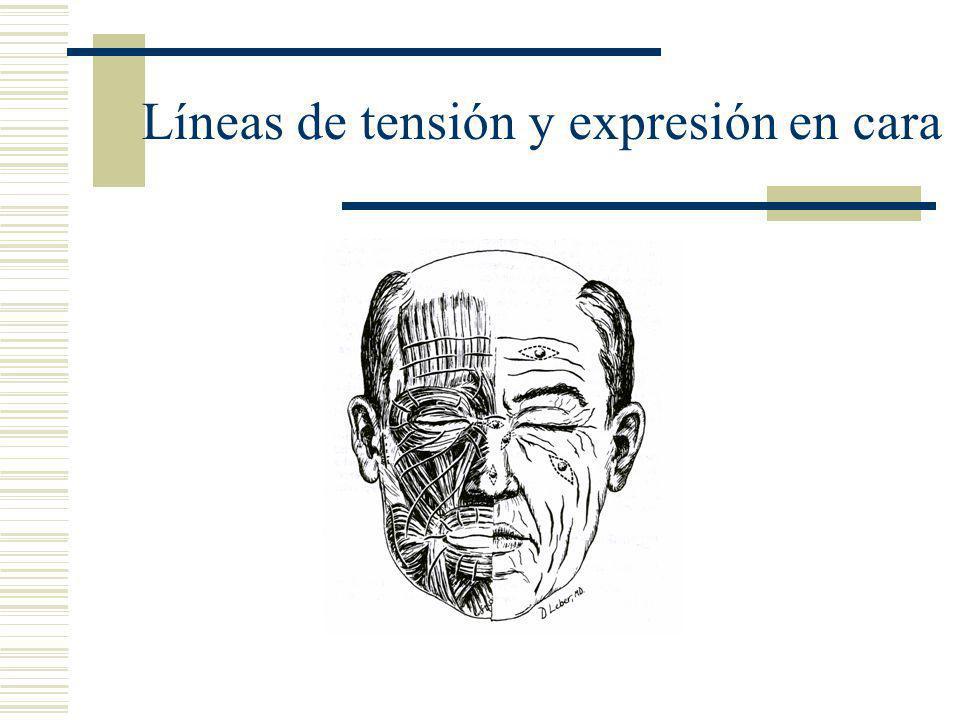 Líneas de tensión y expresión en cara