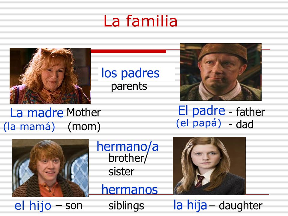 La familia La madre (la mamá) Mother (mom) El padre (el papá) - father - dad el hijo – son hermanos – daughter hermano/a brother/ sister la hija los padres parents siblings