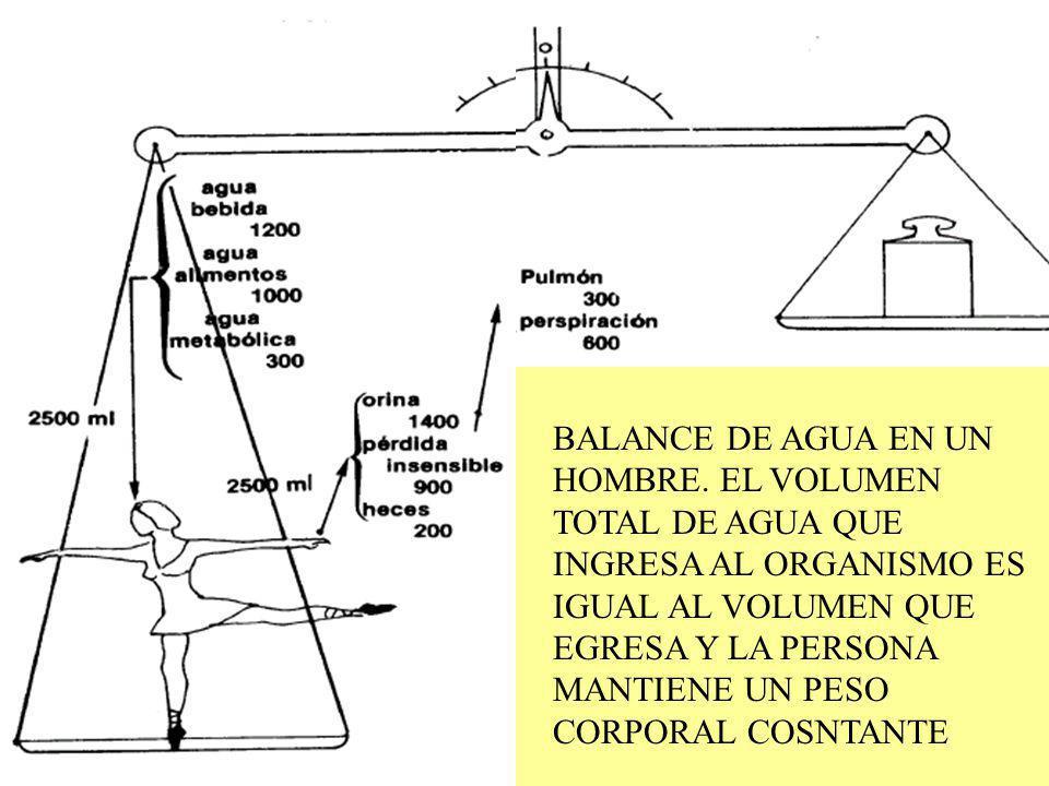 BALANCE HIDRICO: ENTRADAS AGUA- PERDIDAS AGUA =0 (normalidad)