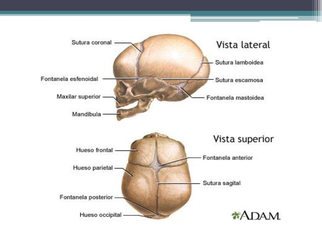 Charmant Wisconsin Anatomie Videos Fotos - Anatomie Von Menschlichen ...