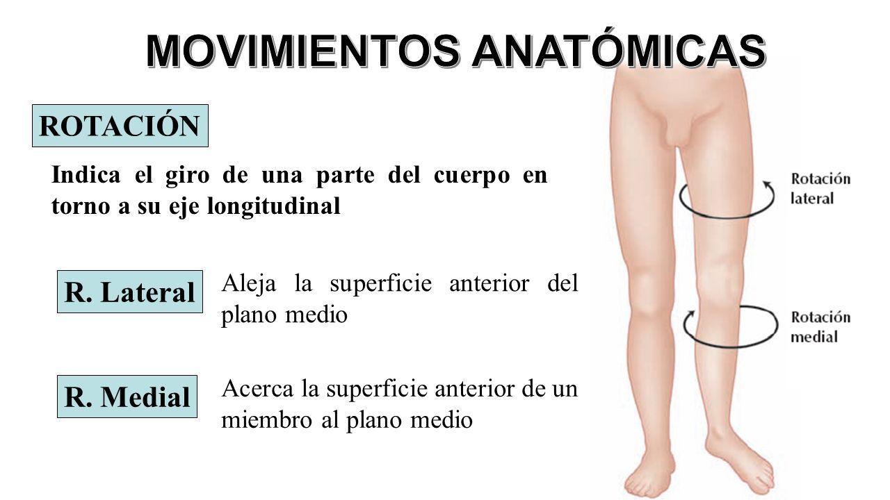 Perfecto Rotación En La Anatomía Bandera - Anatomía de Las ...