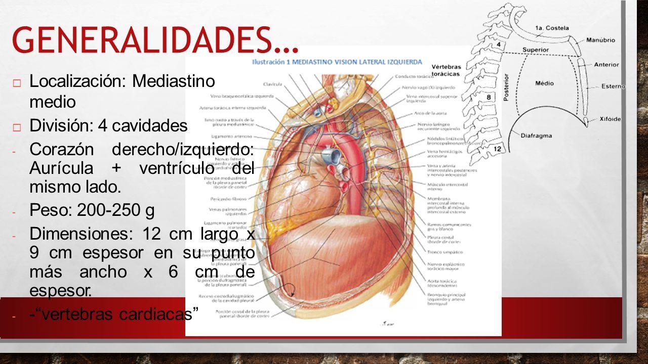 Atractivo Anatomía Del Punto De G Colección de Imágenes - Imágenes ...