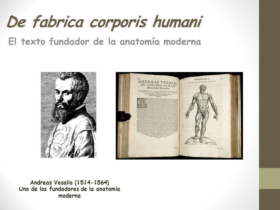 Increíble Fundador De La Anatomía Moderna Ornamento - Imágenes de ...