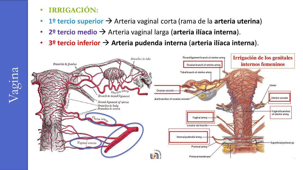 Increíble Anatomía Femenina Os Ornamento - Anatomía de Las ...