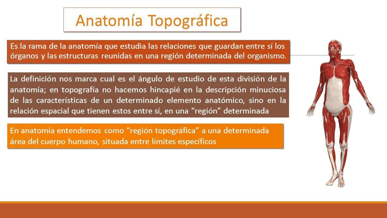 Moderno Por Qué La Anatomía Estudio Componente - Imágenes de ...