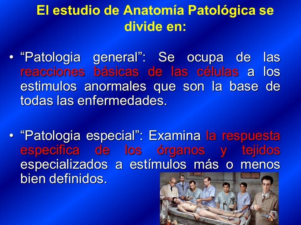 Vistoso Mcgraw Conectar Colina Anatomía Y Fisiología De La Respuesta ...