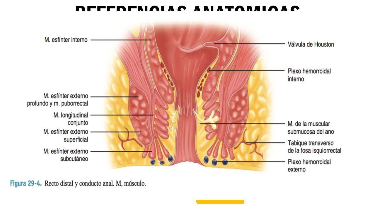 Increíble Anatomía Fosa Isquiorectal Composición - Anatomía de Las ...