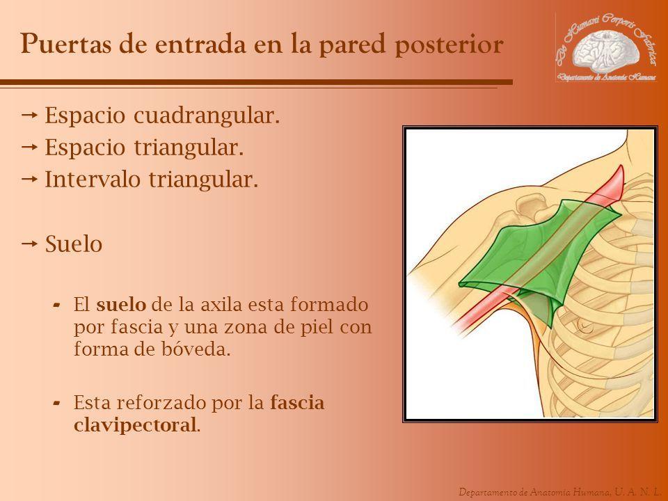 Fantástico Repo Zydrate Anatomía Elaboración - Anatomía de Las ...
