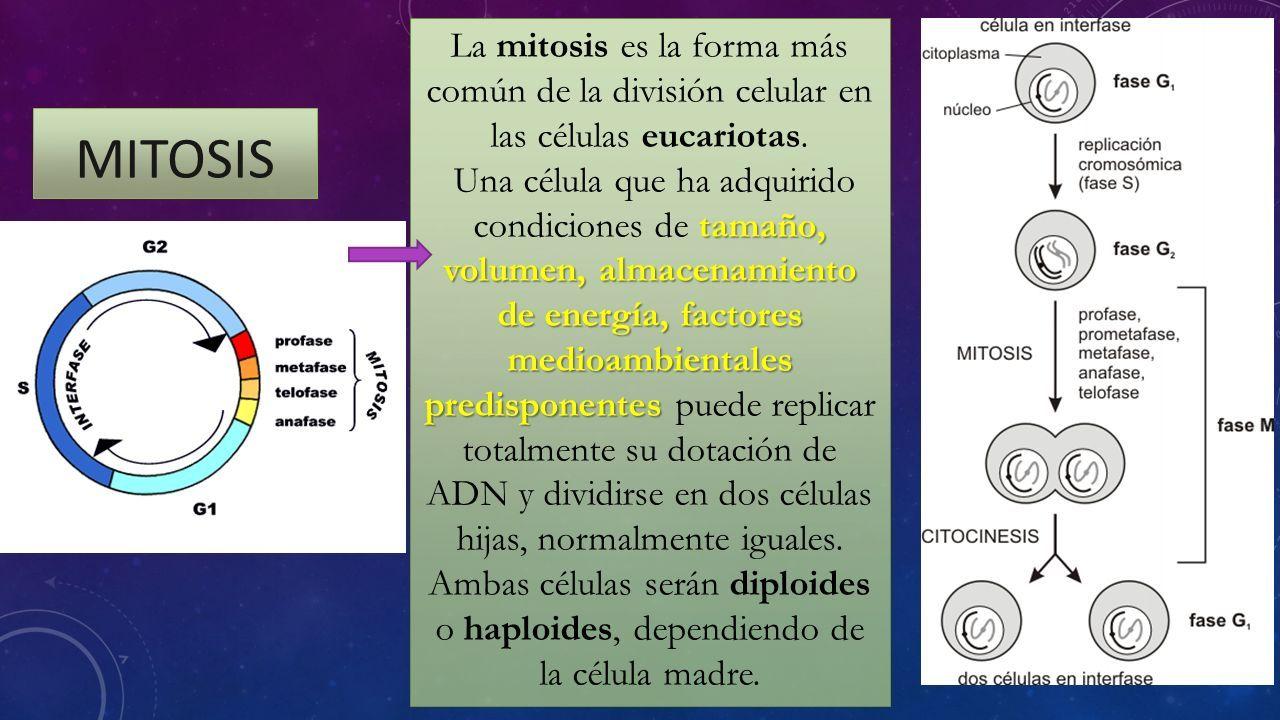 Lujoso Dedo Gordo División De Uñas Ideas - Ideas Para Esmaltes ...