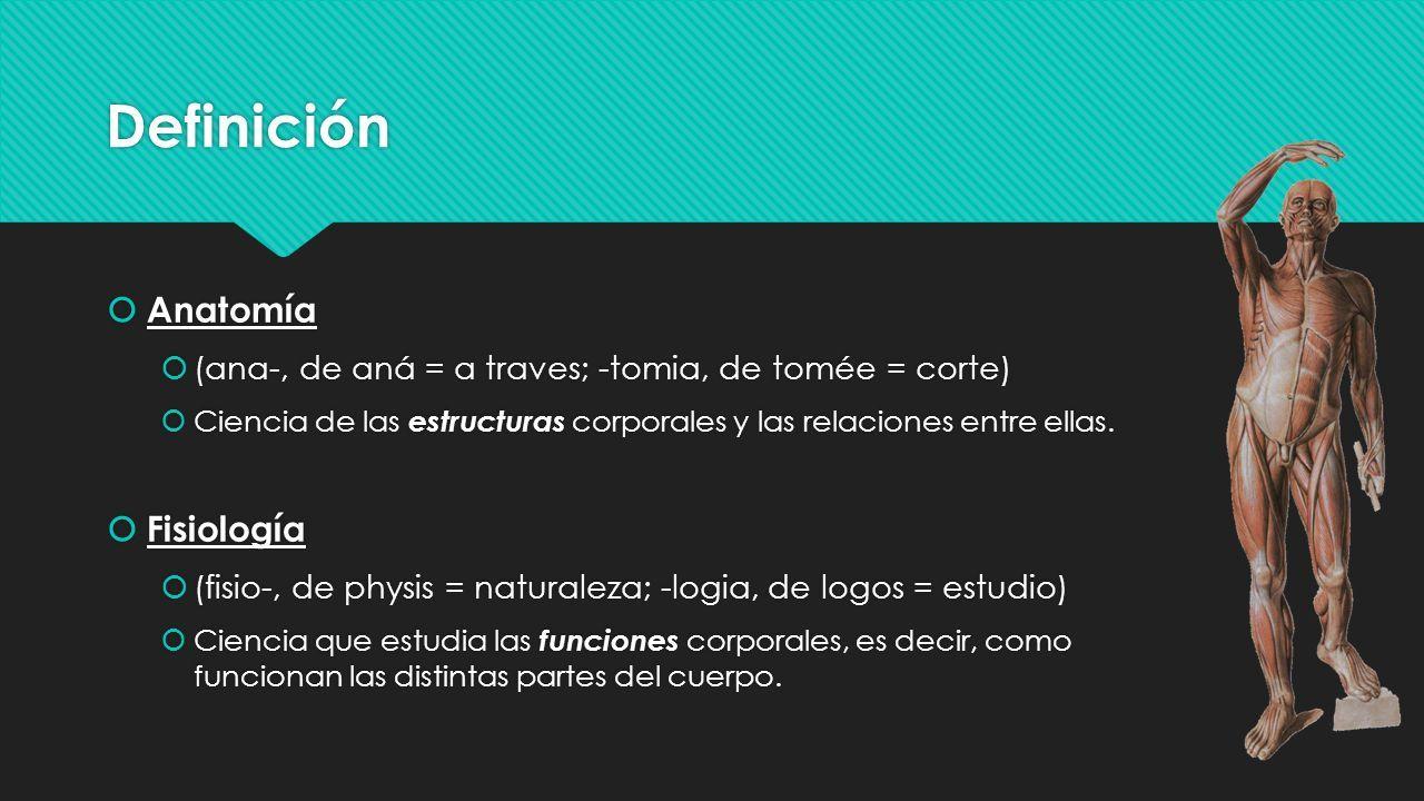 Único Matriz En La Anatomía Galería - Anatomía de Las Imágenesdel ...