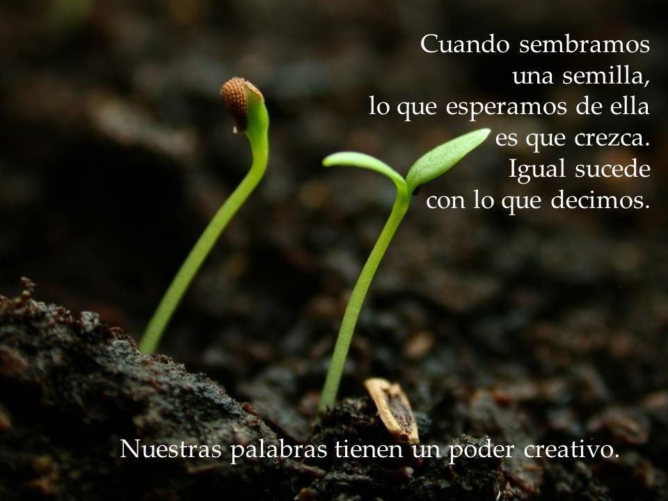 Cuando sembramos una semilla, lo que esperamos de ella es que crezca.