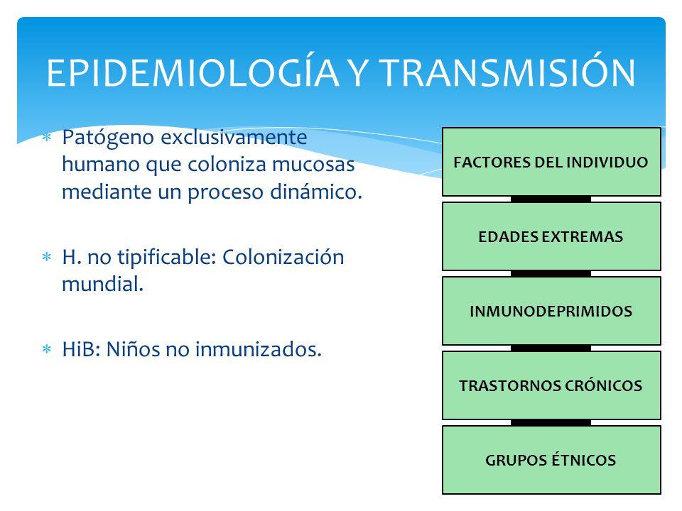 PATOGENIA Y RESPUESTA INMUNITARIA SISTÉMICA LOCAL B No tipificabl e VACUNA RECURRENCIA