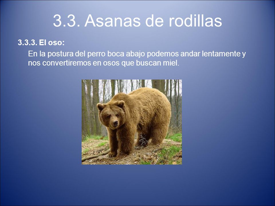 3.3. Asanas de rodillas 3.3.3. El oso: En la postura del perro boca abajo podemos andar lentamente y nos convertiremos en osos que buscan miel.