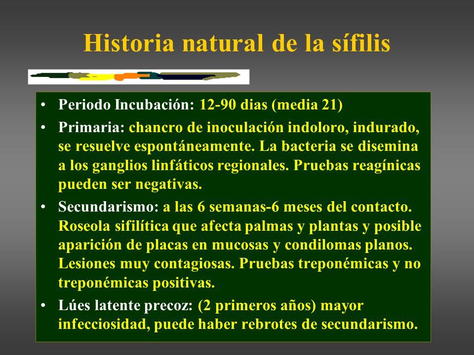 Historia natural de la sífilis Periodo Incubación: 12-90 dias (media 21) Primaria: chancro de inoculación indoloro, indurado, se resuelve espontáneamente.