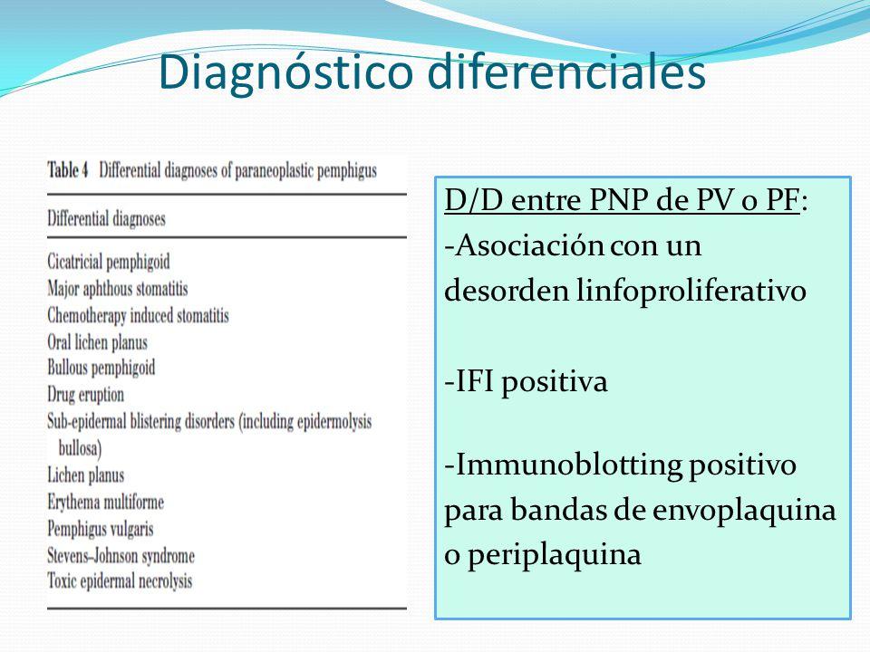 Diagnóstico diferenciales D/D entre PNP de PV o PF: -Asociación con un desorden linfoproliferativo -IFI positiva -Immunoblotting positivo para bandas de envoplaquina o periplaquina