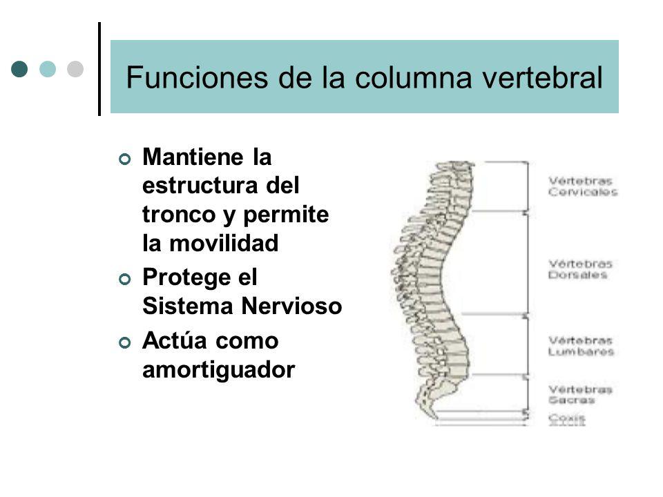 Funciones de la columna vertebral Mantiene la estructura del tronco y permite la movilidad Protege el Sistema Nervioso Actúa como amortiguador